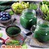 Công dụng tuyệt vời của sản phẩm nhờ vào thành phần tảo lục và diệp lục